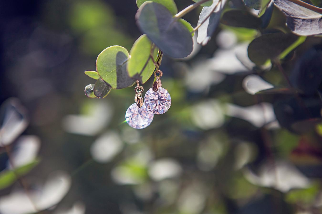detailfoto oorbellen aan eucalyptus